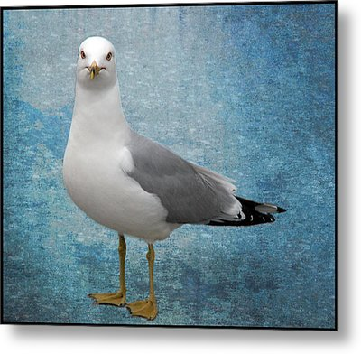 Metal Print featuring the photograph Superior Seagull by Terri Harper