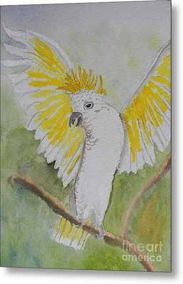 Suphar Crested Cockatoo Metal Print by Pamela  Meredith