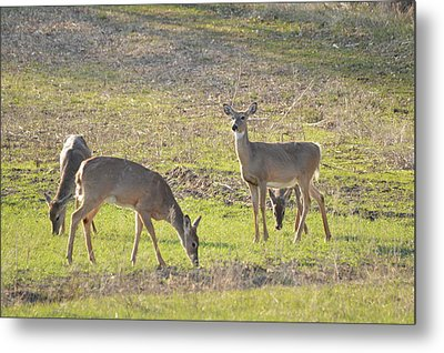 Supper Gathering Metal Print