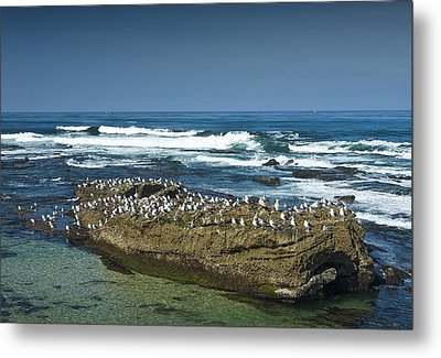 Surf Waves At La Jolla California With Gulls Perched On A Large Rock No. 0194 Metal Print by Randall Nyhof