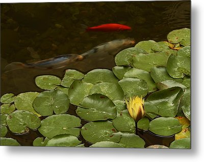 Metal Print featuring the photograph Surface Tension by Michael Gordon