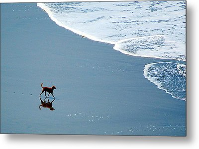 Surfer Dog Metal Print by AJ  Schibig