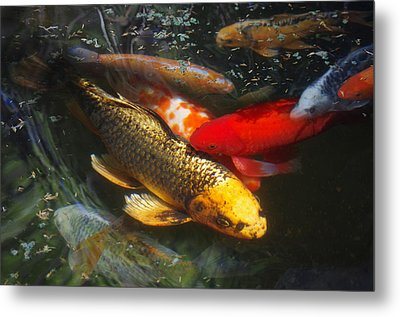 Metal Print featuring the photograph Surreal Fishpond by Adria Trail