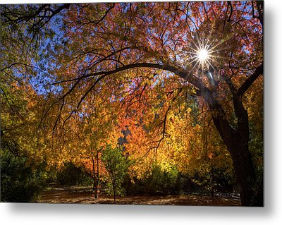 Surrounded By Autumn's Color Metal Print