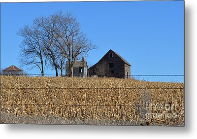 Surrounded By Corn Metal Print by Renie Rutten