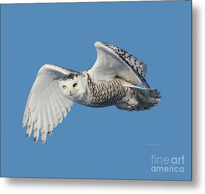 Surveying Her Territory Metal Print by Heather King