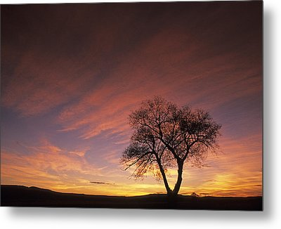 Susie's Tree Metal Print by Latah Trail Foundation