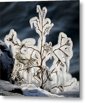 Suspended In Ice Metal Print