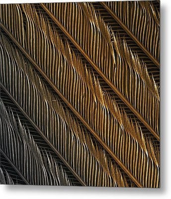 Swallow Feather Detail, Sem Metal Print by Power And Syred