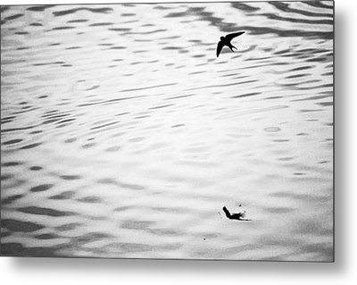 Swallow In Sunset Metal Print