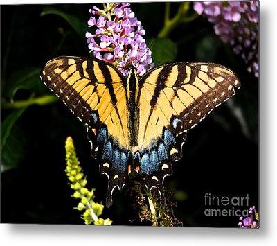 Swallowtail Beauty Metal Print