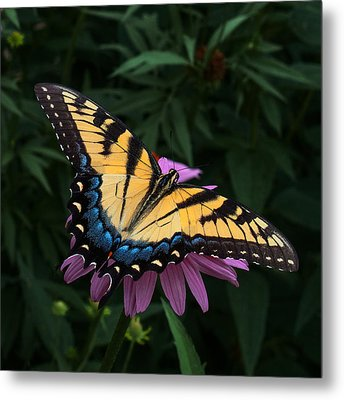 Swallowtail  Metal Print by Don Spenner