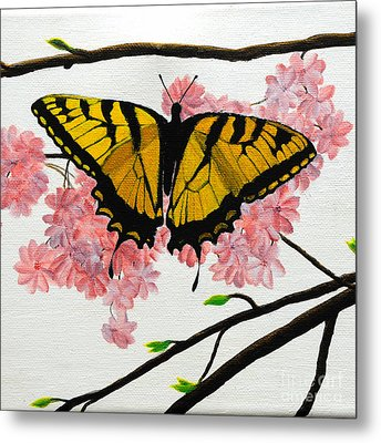 Swallowtail In Cherry Blossoms Metal Print by Jane Axman