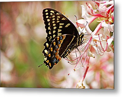 Swallowtail Metal Print by Linda Brown
