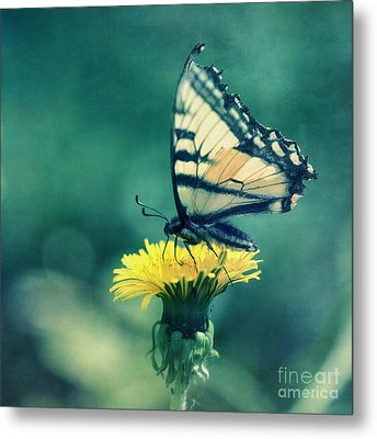 Swallowtail Metal Print by Priska Wettstein
