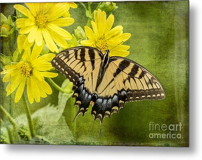 Metal Print featuring the photograph Swallowtail by Vicki DeVico