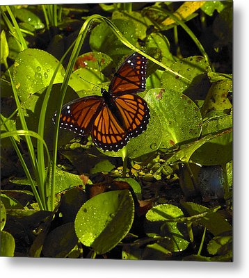 Metal Print featuring the photograph Swamp Butterfly by Silke Brubaker