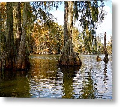 Swamp - Cypress Trees Metal Print