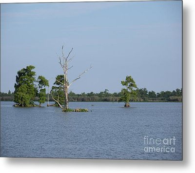 Metal Print featuring the photograph Swamp Cypress Trees by Joseph Baril