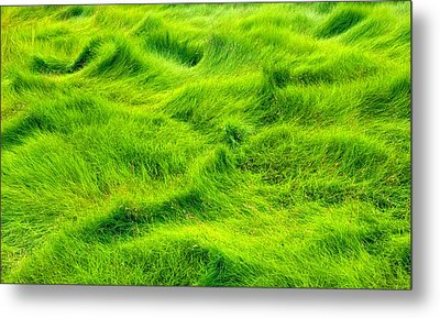 Swamp Grass Abstract Metal Print by Gary Slawsky