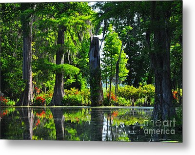 Swamp In Bloom Metal Print