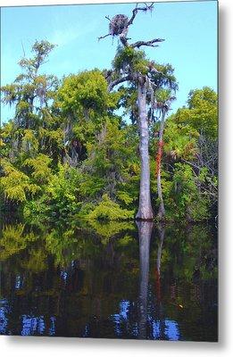 Swamp Land Metal Print by Carey Chen