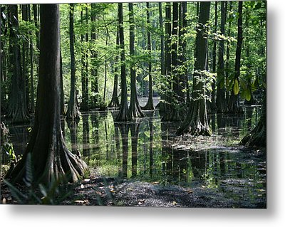 Swamp Land Metal Print