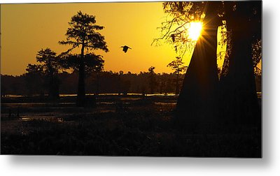 Metal Print featuring the photograph Swamp Sunrise by Silke Brubaker