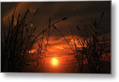 Swamp Sunset  Metal Print