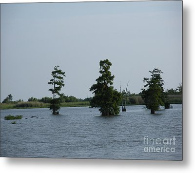 Metal Print featuring the photograph Swamp Tall Cypress Trees  by Joseph Baril