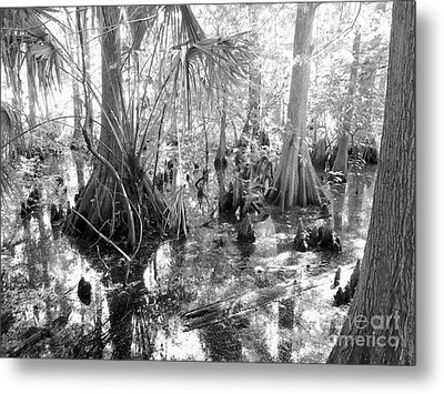 Swampland Metal Print by Carey Chen