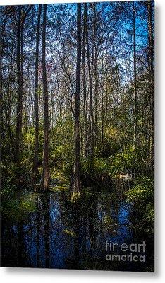 Swampland Metal Print