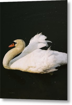 Swan At Rest Wil 115 Metal Print