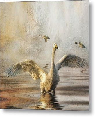 Metal Print featuring the photograph Swan At Sundown by Brian Tarr