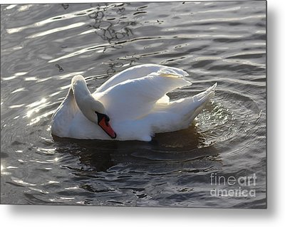 Swan By The Lake # 2 Metal Print