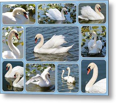 Swan Collage In Blue Metal Print by Carol Groenen