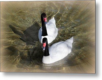 Swan Duo Metal Print by Marty Koch