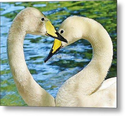 Swan Heart Metal Print by Paulette Thomas