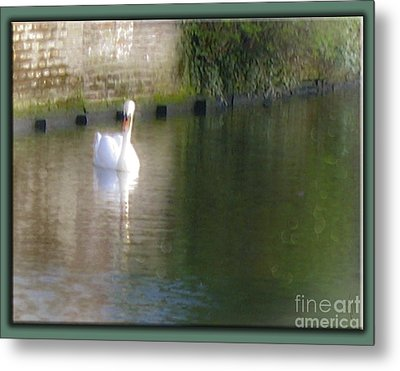 Metal Print featuring the photograph Swan In The Canal by Victoria Harrington