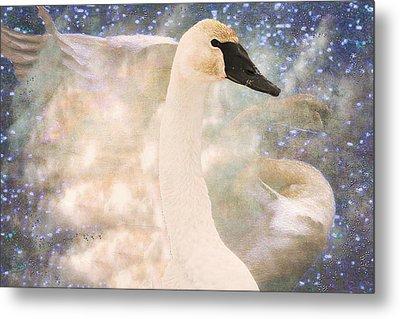 Swan Journey Metal Print by Kathy Bassett