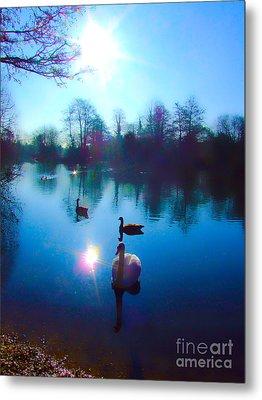 Swan Lake Metal Print by Andrew Middleton