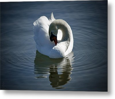 Metal Print featuring the photograph Swan Lake by Pennie  McCracken
