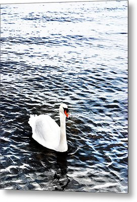 Swan Metal Print by Mark Rogan
