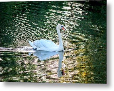 Metal Print featuring the photograph Swan On Water  by Trace Kittrell