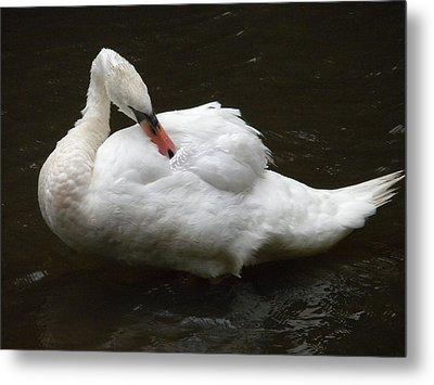 Swan One Metal Print by Teresa Tilley
