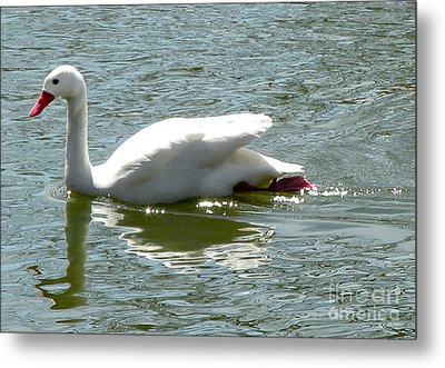 Swan Reflection Metal Print by Terry Weaver