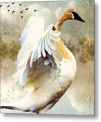 Swan Sense Metal Print