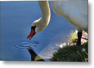 Metal Print featuring the photograph Swan Song by Cathy Donohoue
