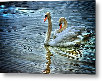 Swan Song Metal Print by Dennis Baswell