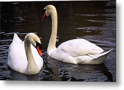 Metal Print featuring the photograph Swan Two by Elf Evans
